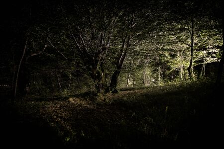 Magical lights sparkling in mysterious forest at night. Pine forest with strange light. Long exposure shot 写真素材