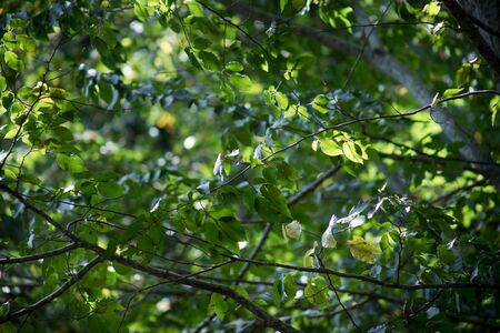 Leaves twigs green and yellow color beautiful background. Summer forest. Nature of Azerbaijan close up. Selective focus Imagens