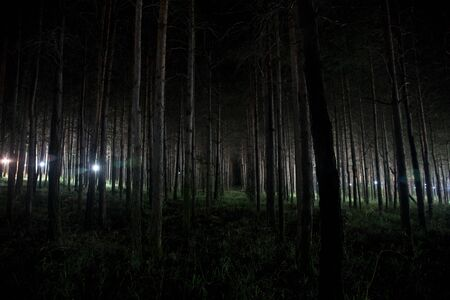 magical lights sparkling in mysterious forest at night. Pine forest with strange light. Long exposure shot 版權商用圖片
