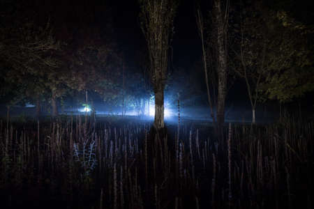 Dark night in forest at fog time. Surreal night forest scene. Horror halloween concept. Magical lights sparkling in mysterious forest at night. Long exposure shot Archivio Fotografico