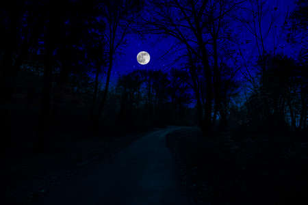 Mountain Road through the forest on a full moon night. Scenic night landscape of dark blue sky with moon. Archivio Fotografico