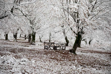 Old wooden table top covered to snow in winter forest. Snowy background. winter nature concept.