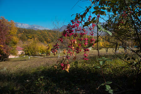 Red and Orange Autumn Leaves Background. Outdoor. Azerbaijan. Caucasus Stock fotó