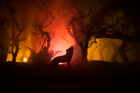 Silhouette of howling wolf against burning forest skyline and. Creative artwork decoration. Selective focus