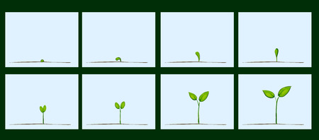 Animation of seed germination on soil, evolution concept Vettoriali