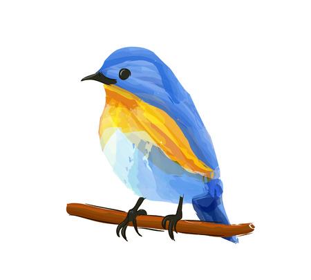 Blue bird, male Himalayan Bluetail (Tarsiger rufilatus) on a branch.