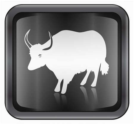 in ox: Ox Zodiac icon, isolated on white background.