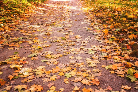 Avenue of the park in the autumn afternoon