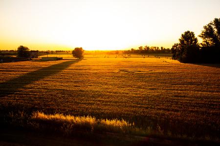 Tramonto sulla valle del fiume tra i campi di grano. Castelnovo di Sotto - Italia