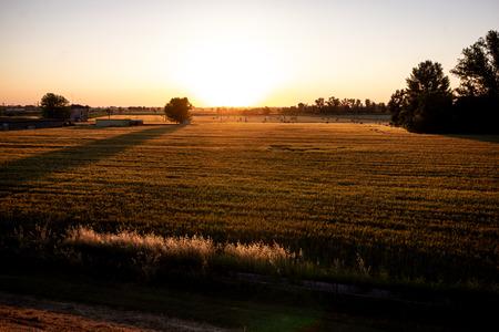 Tramonto di sole tra i campi coltivati della pianura emiliana. Castelnovo di Sotto - Italia