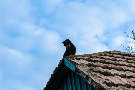 a cat walks on a tile roof smoke from a chimney