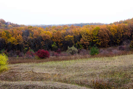 In the distance you can see a deciduous forest photo from the hump