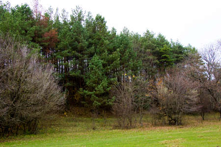 In the distance, you can see a photo of a deciduous and pine forest from a hill.