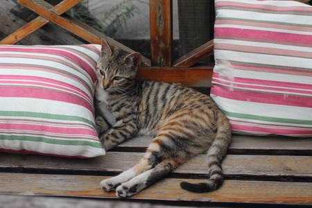 �xtasis: cat On the wooden seat