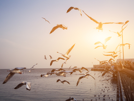 Seagulls bird fly above the sea at sunset time with twilight scene  at Bangpu Recreation Center Samut Prakan in  Thailand