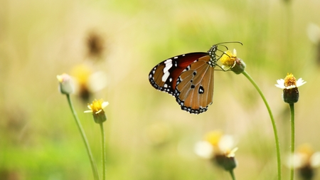 time to shine: butterfly