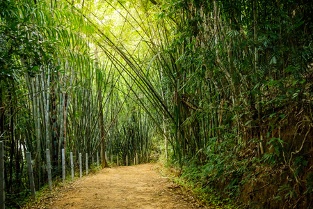 Bamboo forest hiking path with sun rays coming through at Ratchaprapha Dam at Khao Sok National Park, Surat Thani Province, Thailand Stock Photo - 102312449