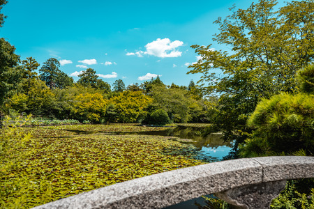 Zen lake garden with thousands of lotus flowers with stone bridge in foreground and forest in background in Ryoanji Temple, Kyoto, Japan Imagens