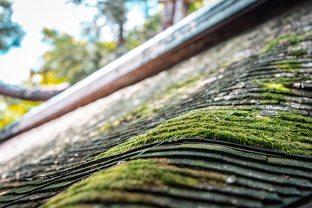 Old wooden temple roof with green moss all over it in Ryoanji Temple, Kyoto, Japan