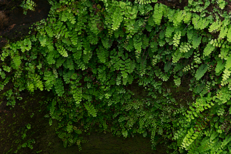 be wet: moss and ferns in be wet area.