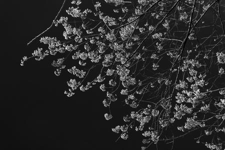chang: Khun Chang Kian (Black&White) Stock Photo