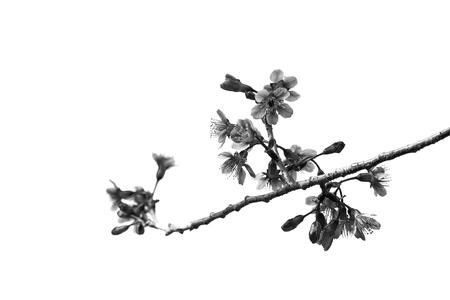 chang: Khun Chang Kian(Black&White)
