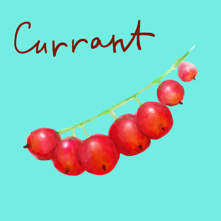 red currant: watercolor red currant