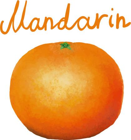 bg: painted mandarin with no BG Illustration