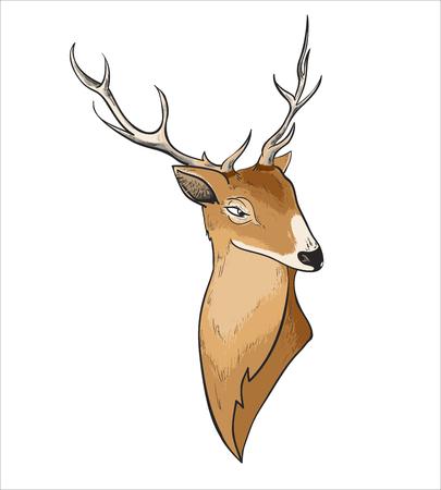 Hand drawn vector cartoon deer header portrait Illustration