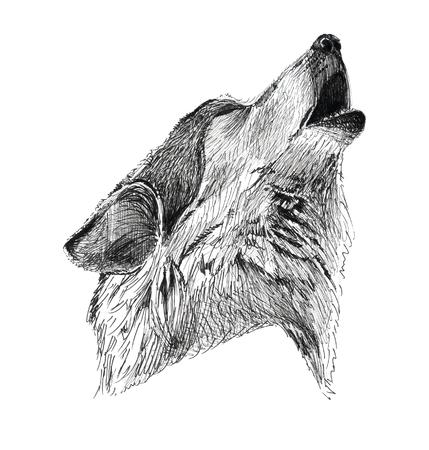 Black Ink Tattoo Hand Drawn Wolf Portrait