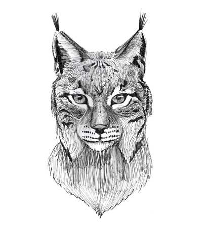 Black Ink Tattoo Hand Drawn Lynx Portrait Stockfoto