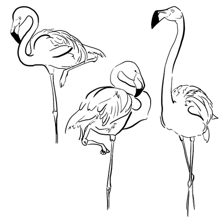 Hand drawn ink stylised elements set. Black lines. Brush stroke. Tropical birds collection. Flamingos set. Фото со стока