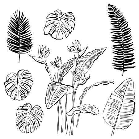 Hand drawn ink stylised elements set. Black lines. Brush stroke. Tropical leaf collection. Strelitzia, fern and monstera leaves.