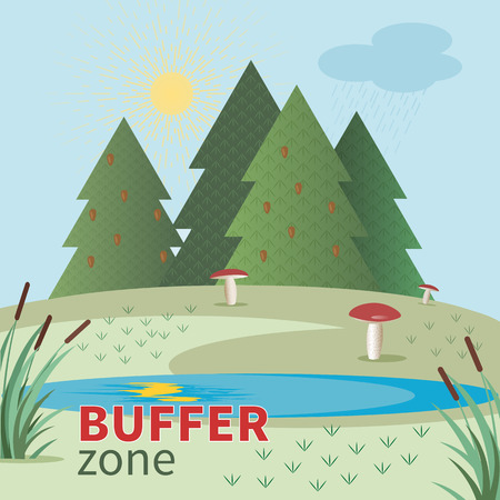 buffer: Bright flat image of buffer zone with fir trees, mushrooms in the meadow and lake