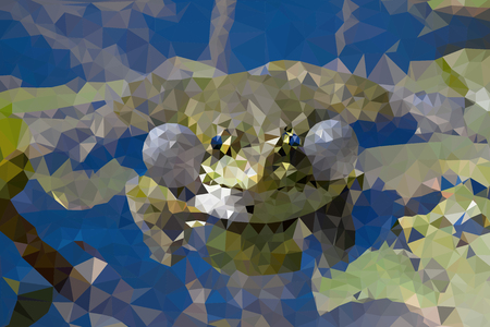 webbed: frog in a private environment, abstract triangles