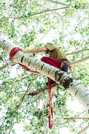 Man climbs a tree and heals it. Stock Photo