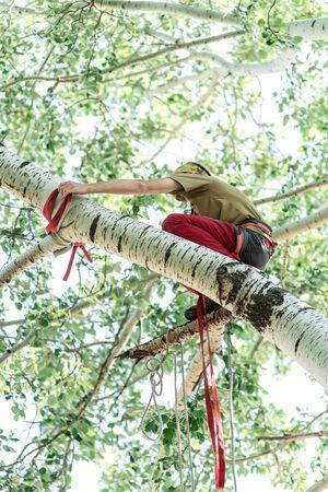 Man climbs a tree and heals it. 스톡 콘텐츠