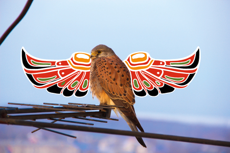 raptorial: Beautiful hawk. Raptorial bird which is resting in the evening. Photo with illustration.