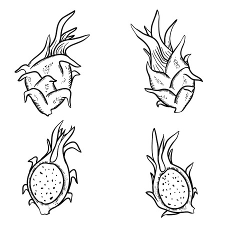 vitamine: Vector illustration with sketch dragon fruits. Set of doodle dragon fruits on white background. Handy drawn fruits. Illustration