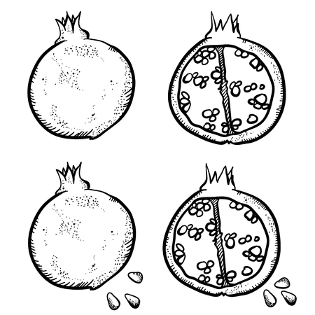 handy: Vector illustration with sketch pomegranate. Set of doodle pomegranates on white background. Handy drawn fruits.