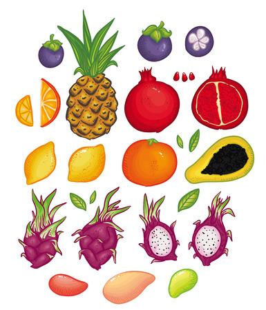 Vector illustration set with bright Thai fruits. Masngosteen, mong-khut, pineapple, orange, lemon, dragon fruit, mango, papaya and  pomegranate illustration set. Beautiful doodle and cartoon fruits.