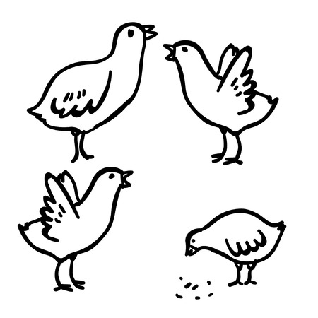 cockscomb: Vector illustration with four doodle cute chicken. Domestic doodle bird. Funny handy drawn chicken. Cartoon chicken. Doodle black chicken on white background.