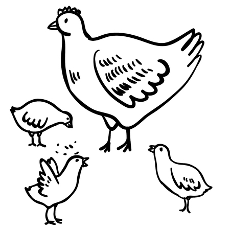 cockscomb: Vector illustration with four doodle cute chicken and hen. Domestic doodle birds. Funny handy drawn chicken and hen. Cartoon hens. Doodle black birds on white background.