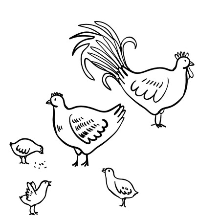 cockscomb: Vector illustration set with  rooster, hen and chicken. Doodle  rooster, chicken and hen. Cute doodle illustration with domestic birds on white background. Illustration