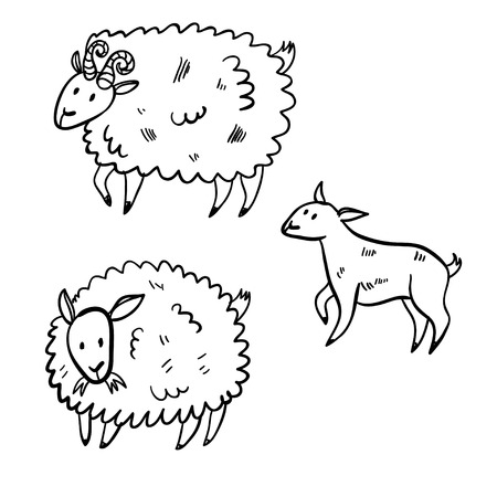 Vector illustration set with farm animals. Doodle cute three sheep. Cartoon buck and sheep. Handy drawn domestic animals.