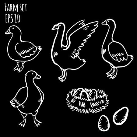 color image mallard duck: Vector illustration farm set.