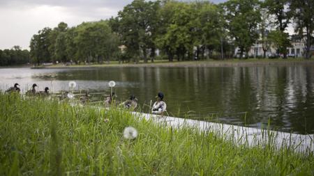 Foto van groen zomerpark met mooi meer en eenden Stockfoto
