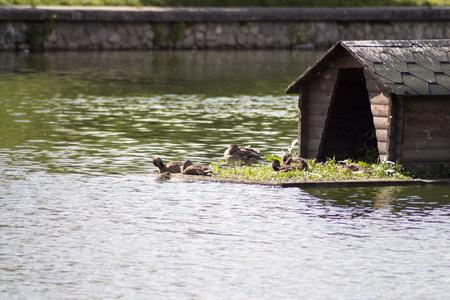 foto zomerpark met prachtig meer en eenden Stockfoto