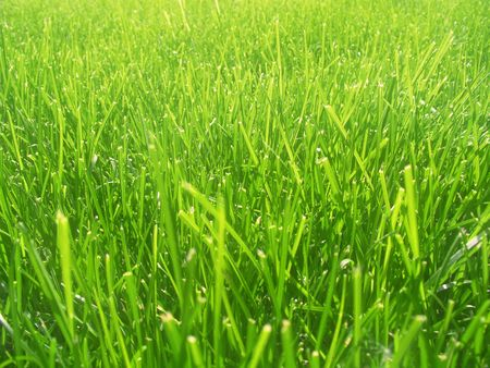 Green grass background. Fresh grass under solar beams. Stock Photo