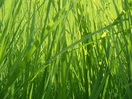 Green grass background Stock Photo - 3466252
